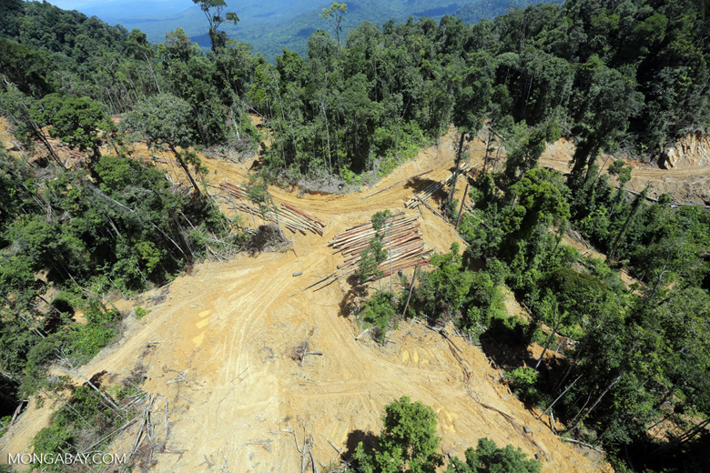 Industrial deforestation in Borneo