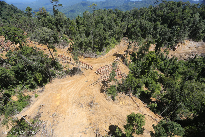 Industrial deforestation in Malaysian Borneo -- sabah_aerial_0669