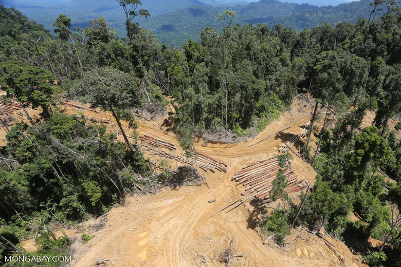 Conventional logging site in Borneo