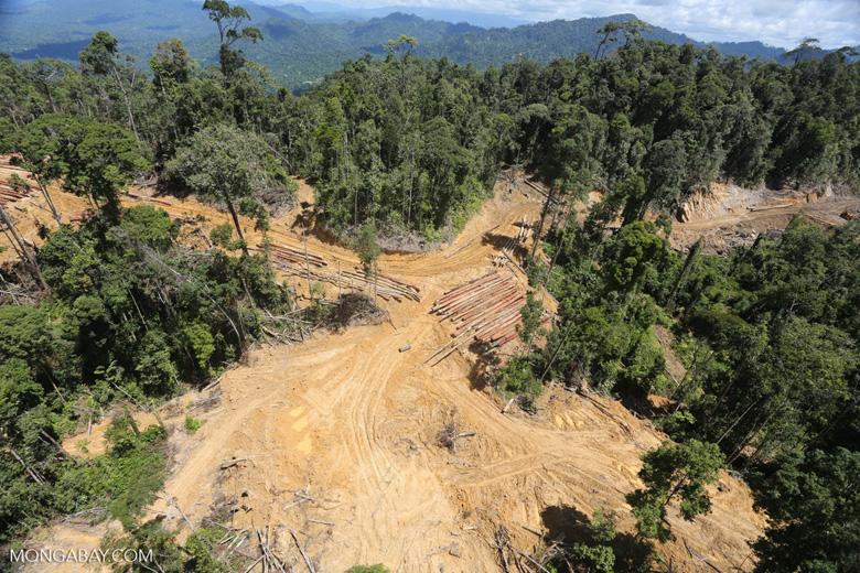 Heavy logging in Borneo -- sabah_aerial_0672