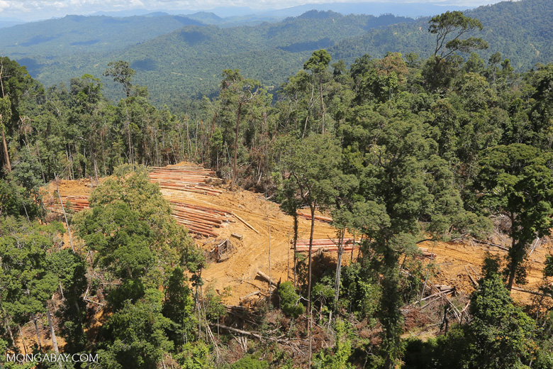Conventional logging operation in Borneo -- sabah_aerial_0675