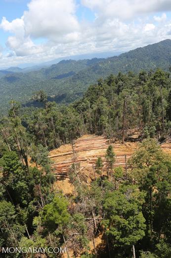 Industrial logging in Malaysian Borneo -- sabah_aerial_0678