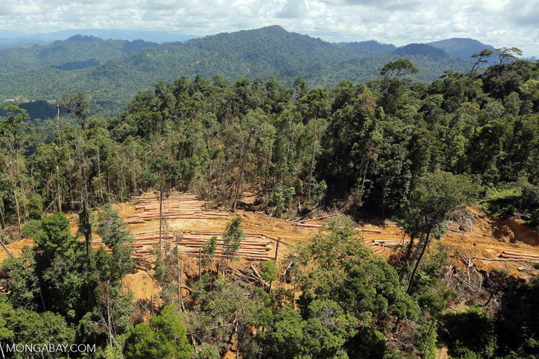 Bulldozer at a conventional logging site in Malaysian Borneo