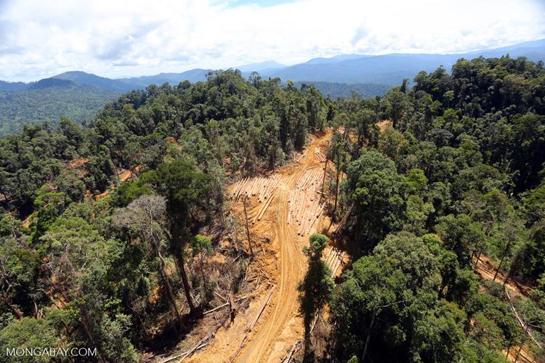 Heavy logging in Borneo -- sabah_aerial_0685