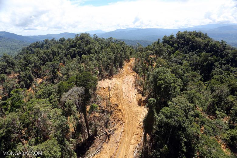 Rainforest degradation for timber production in Borneo -- sabah_aerial_0687
