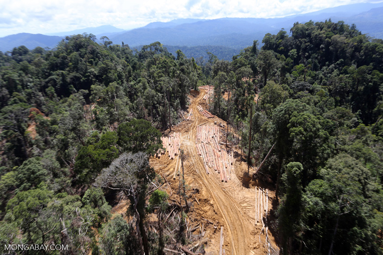 Conventional logging operation in Malaysian Borneo -- sabah_aerial_0689