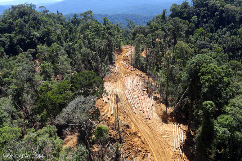 Logging in Borneo. Photo by Rhett A. Butler