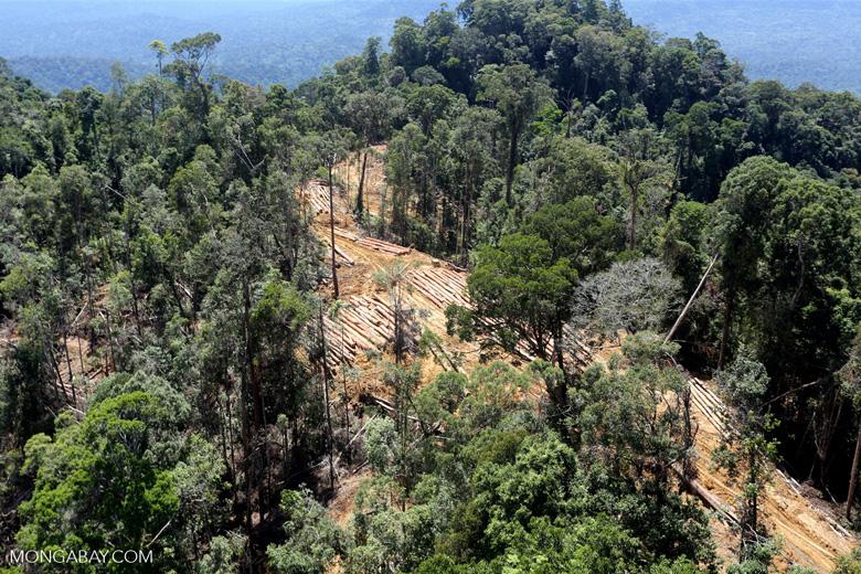 Conventional logging site in Borneo -- sabah_aerial_0696