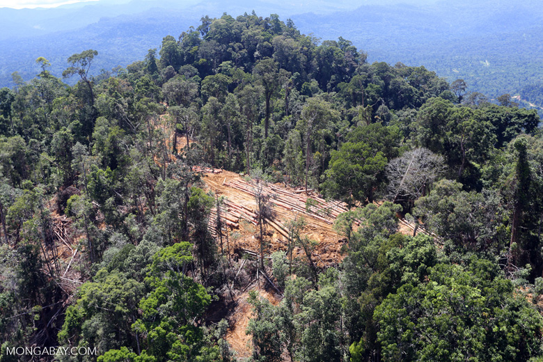 Conventional logging site in Malaysian Borneo -- sabah_aerial_0697