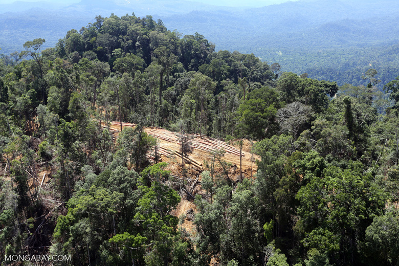 Forest destruction for timber production in Borneo