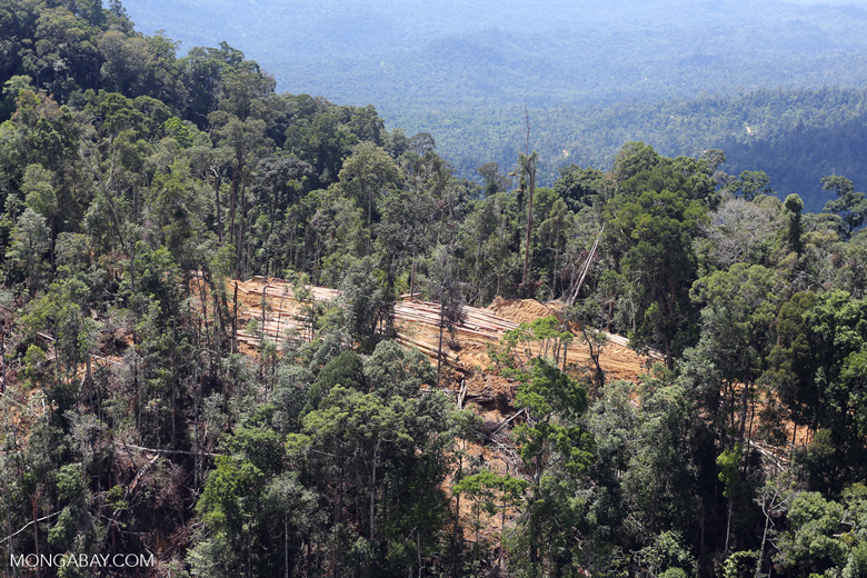 Conventional logging operation in Malaysian Borneo -- sabah_aerial_0702