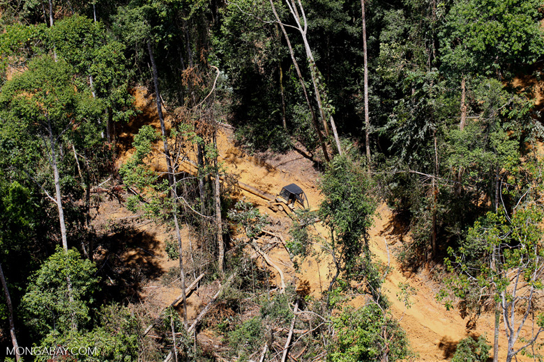 Tropical forest degradation for timber production in Borneo -- sabah_aerial_0715
