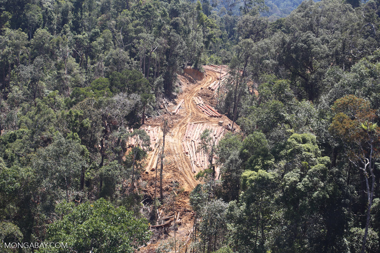 Forest degradation for timber production in Borneo -- sabah_aerial_0734