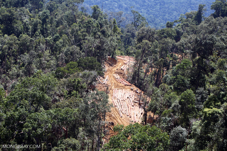 Active logging operation in Borneo
