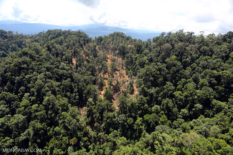 Industrial timber harvesting in Borneo