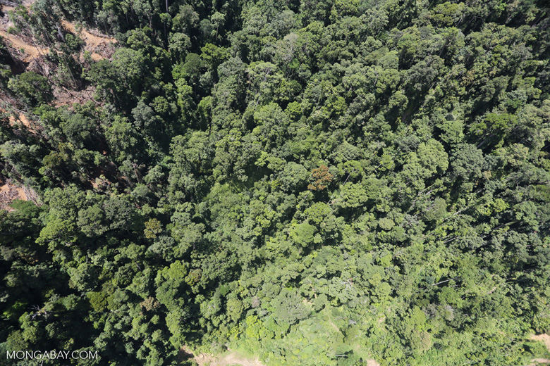 Rain forest degradation for timber production in Borneo -- sabah_aerial_0747