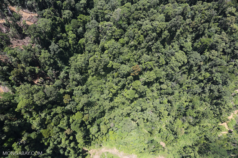Tropical forest destruction for timber production in Borneo -- sabah_aerial_0748