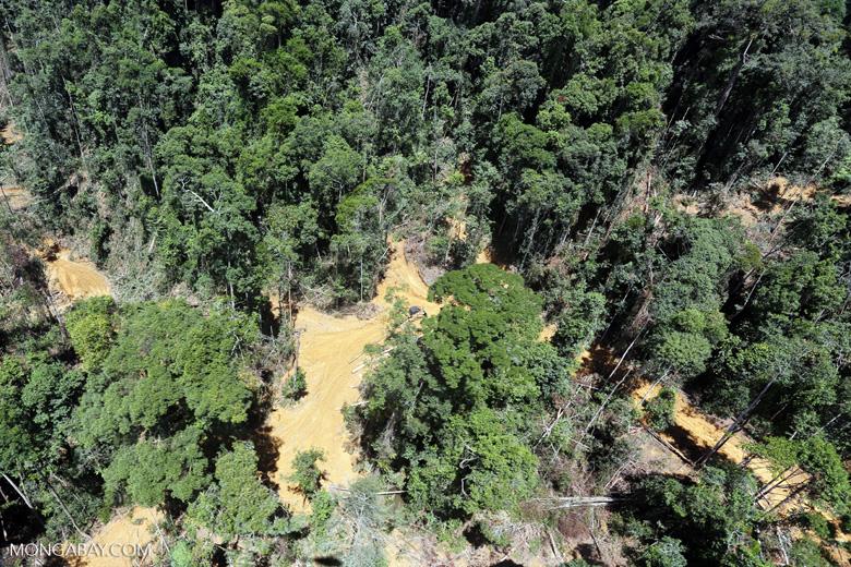 Heavy logging in Borneo -- sabah_aerial_0754