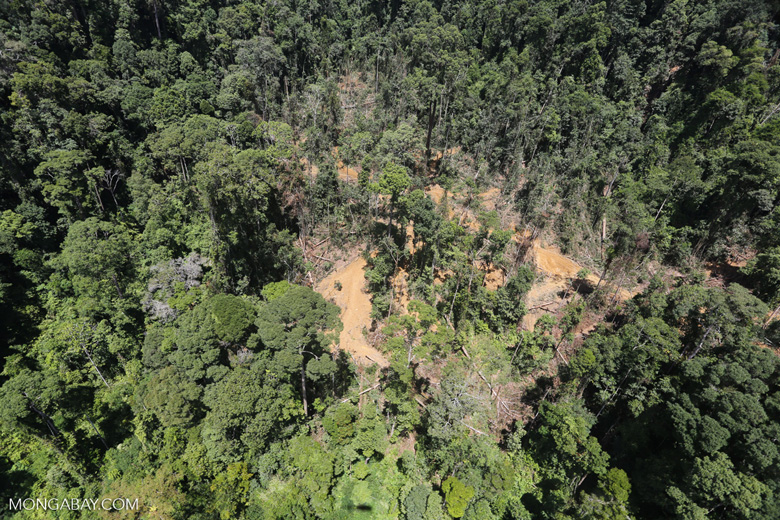 Rain forest degradation for timber production in Borneo -- sabah_aerial_0756