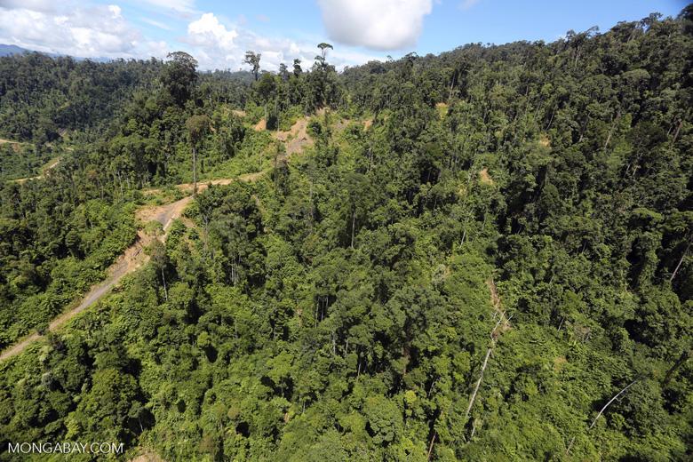 Logging road in Borneo -- sabah_aerial_0762