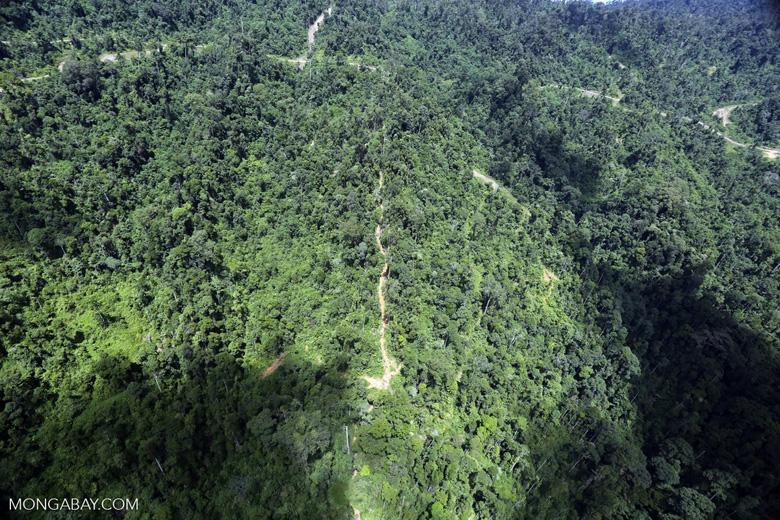 Logging road in Borneo -- sabah_aerial_0766
