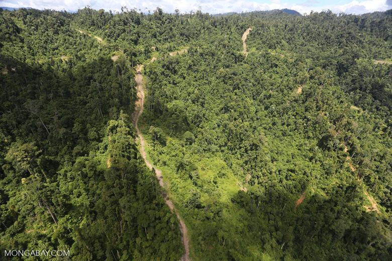 Logging road in Borneo -- sabah_aerial_0770