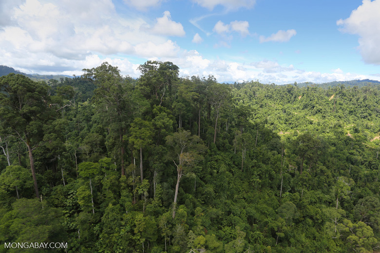 Forest heavily degraded by logging in Borneo