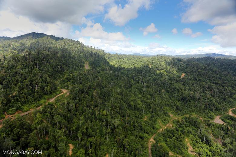 Logging road in Borneo -- sabah_aerial_0782