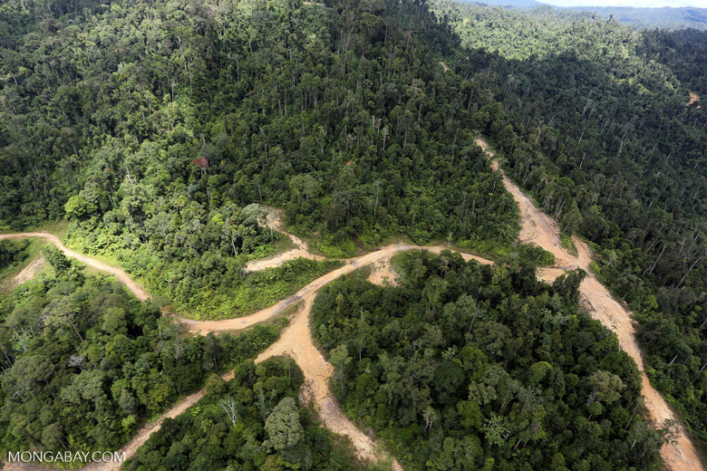 Logging road in Borneo -- sabah_aerial_0789