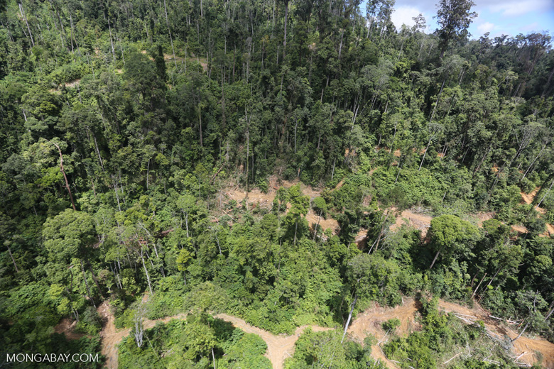 Forest heavily degraded by logging in Borneo -- sabah_aerial_0795