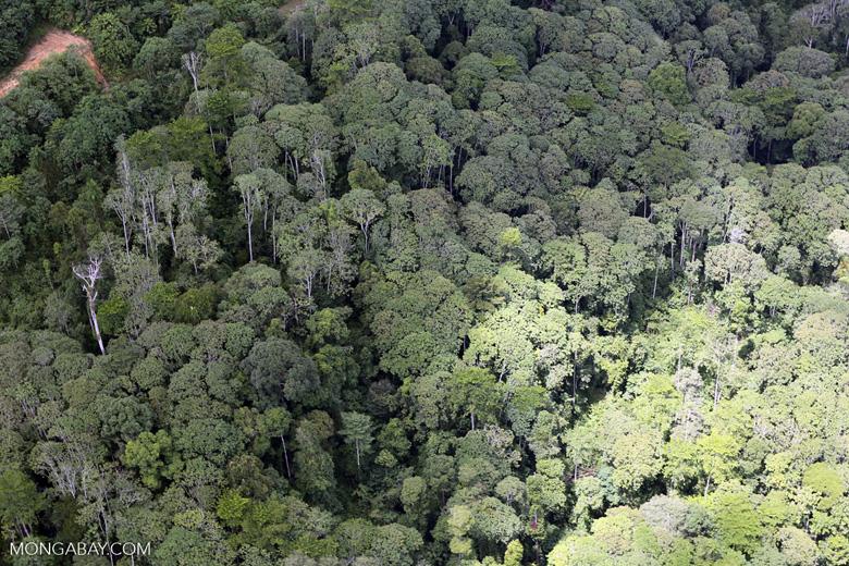 Logging zone in Borneo -- sabah_aerial_0828