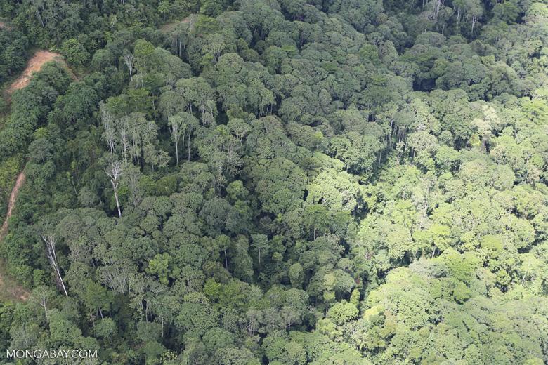 Logging zone in Borneo
