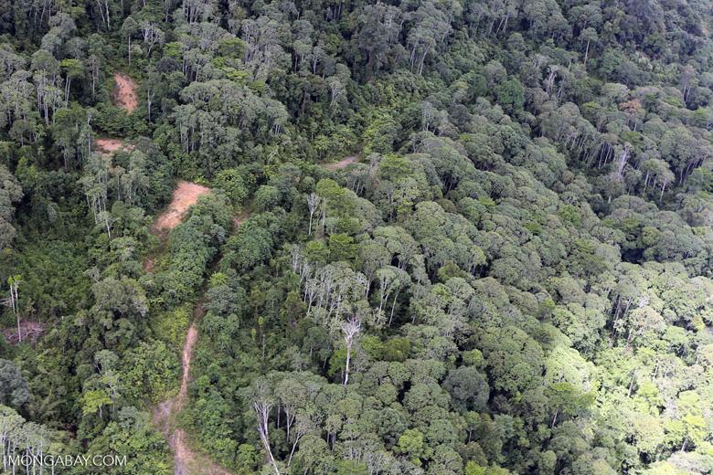 Logging area in Borneo