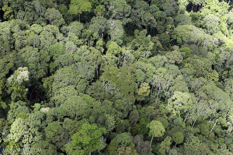 Borneo rain forest -- sabah_aerial_0837