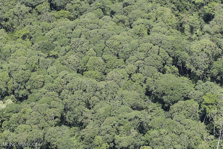 Rain forest canopy in Borneo
