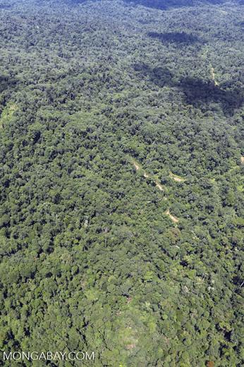 Tropical rainforest in Borneo -- sabah_aerial_0866