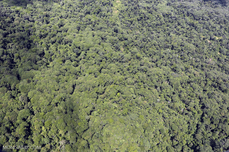 Tropical forest in Borneo -- sabah_aerial_0871