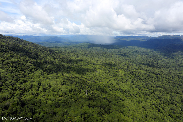 Tropical rain forest in Borneo -- sabah_aerial_0879