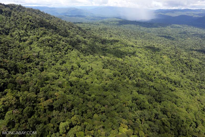 Tropical rain forest in Borneo