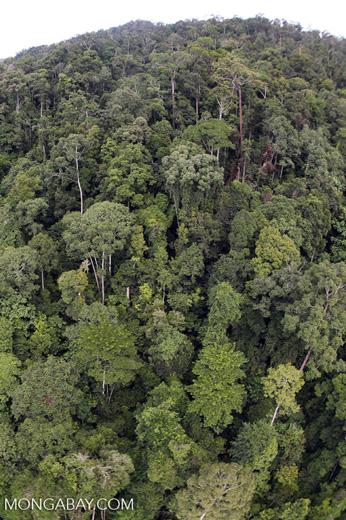 Tropical rainforest in Borneo -- sabah_aerial_0911