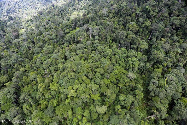 Tropical rainforest in Borneo -- sabah_aerial_0932