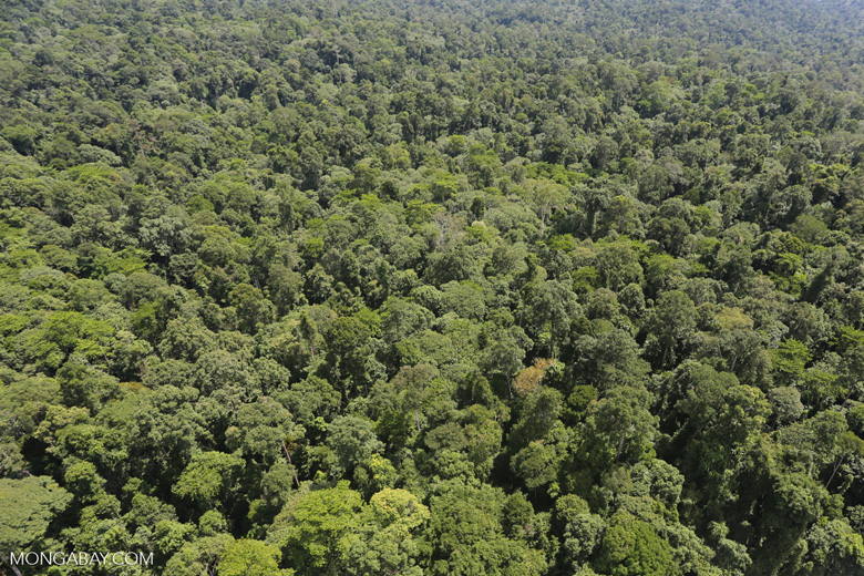 Tropical forest in Borneo -- sabah_aerial_0990