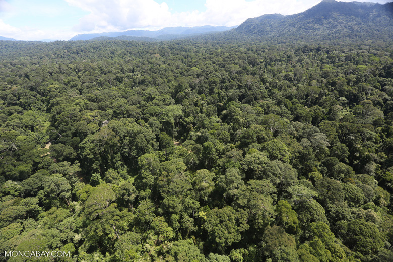 Tropical forest in Borneo -- sabah_aerial_1008