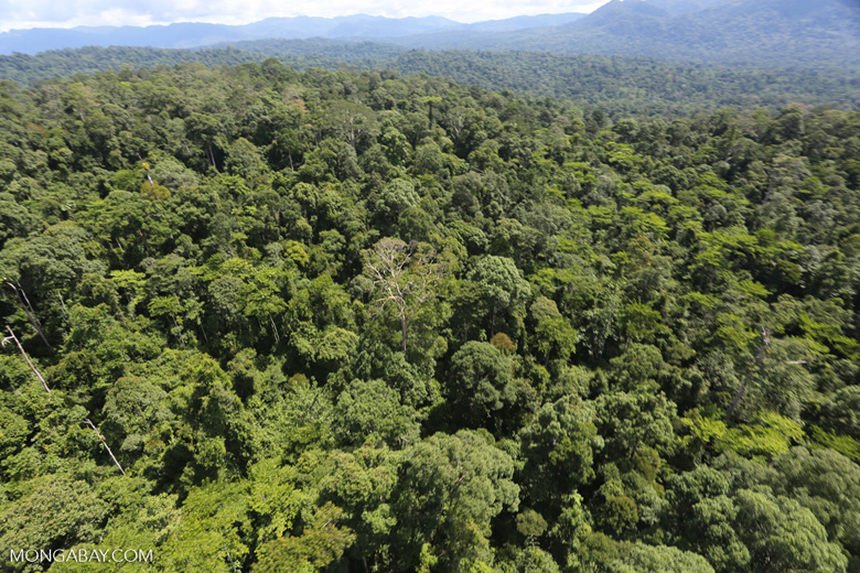 Tropical rain forest in Borneo -- sabah_aerial_1014