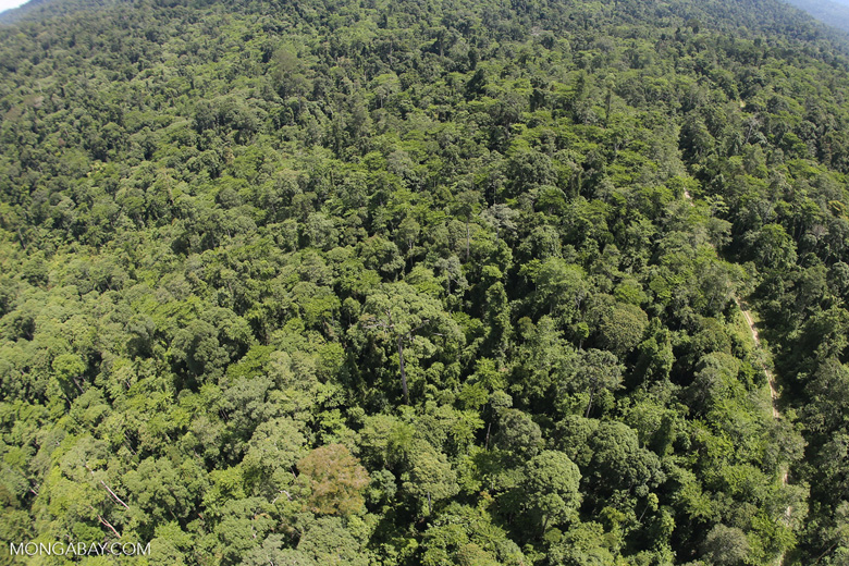 Logging road in the rain forest of Borneo -- sabah_aerial_1016