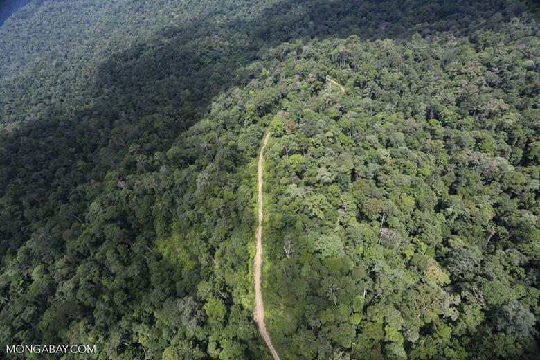 Logging road in the Borneo rainforest -- sabah_aerial_1018