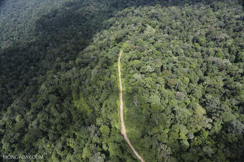 Logging road in the Borneo rain forest