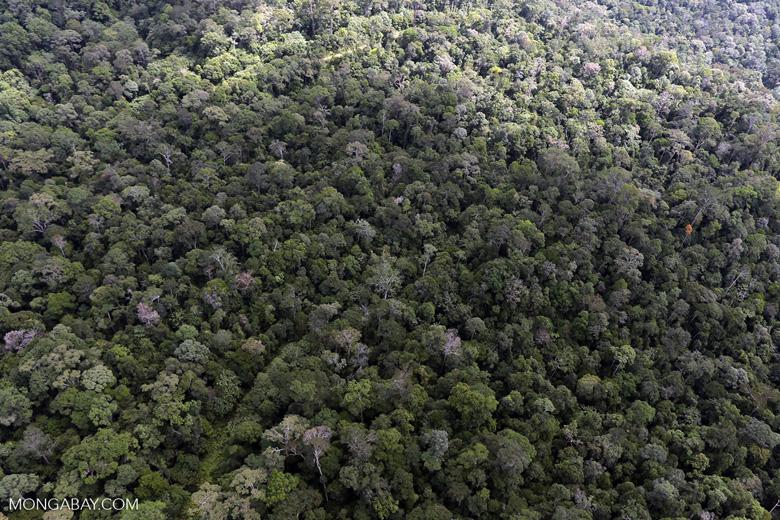 Borneo rainforest -- sabah_aerial_1044
