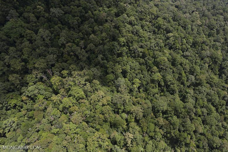 Borneo rainforest -- sabah_aerial_1050