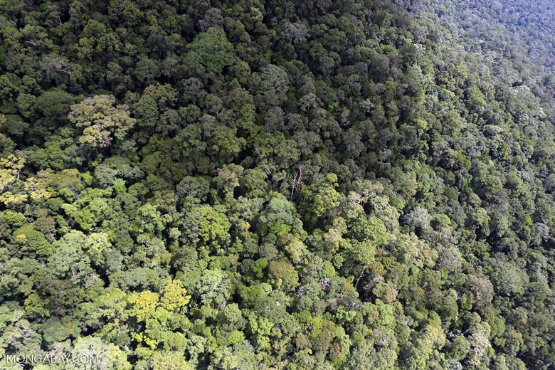Borneo rainforest -- sabah_aerial_1052
